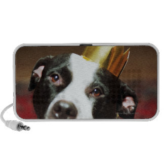 The latin name for all domestic dogs is Canis Laptop Speaker