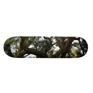 The leafy cork oak or tree of the mount cork skate deck
