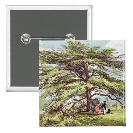 The Lebanon Cedar Tree in the Arboretum, Kew Garde Pinback Button