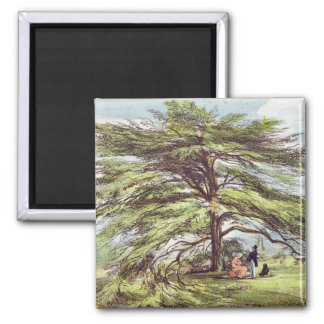 The Lebanon Cedar Tree in the Arboretum, Kew Garde Magnet