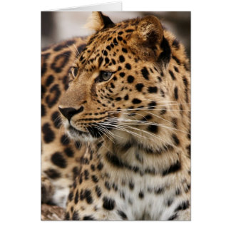 The Leopard Card
