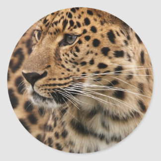The Leopard Classic Round Sticker