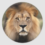 The Lion Classic Round Sticker