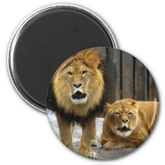 The Lion Duet Roaring at the Snow Flakes! 6 Cm Round Magnet