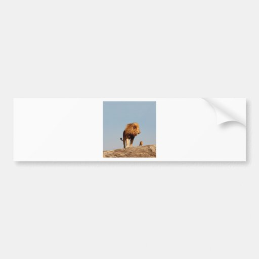 The Lion King ( Adult Lion and Cub) Bumper Stickers