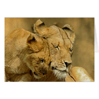 The Lioness and Cub Card