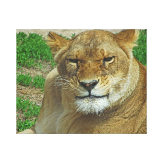 The Lioness Gallery Wrapped Canvas