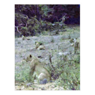 The Lionesses Watch And Wait Post Card