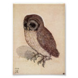 The Little Owl by Albrecht Durer Poster