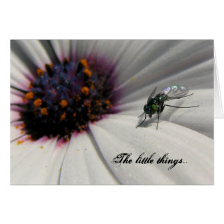 The little things... greeting card