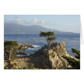 The Lone Cypress Card