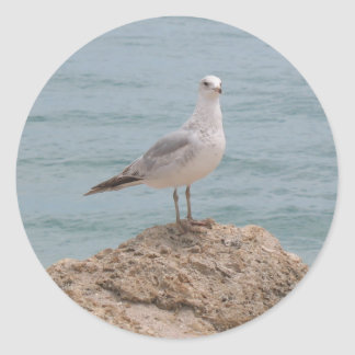 The Lone Seagull (2134) Round Sticker