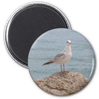 The Lone Seagull Fridge Magnet