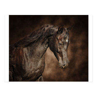 The lone stallion post card