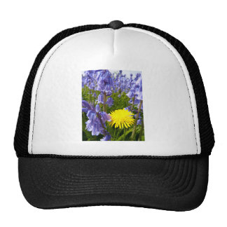 The lonely Dandelion Cap