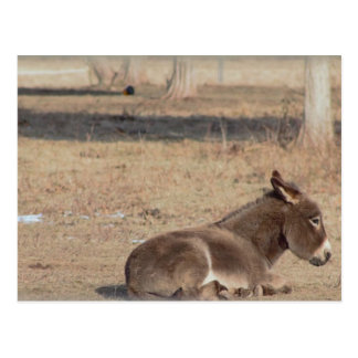 The Lonely Donkey Postcard