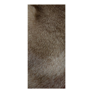 The look of Luxurious Seal Point Siamese Cat Fur Rack Card