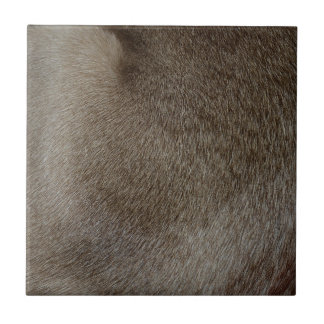 The look of Luxurious Seal Point Siamese Cat Fur Tile