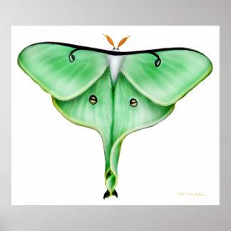 The Luna Moth Print