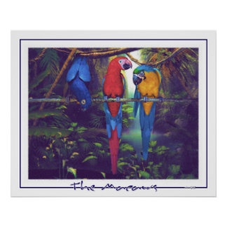 The Macaws - Poster