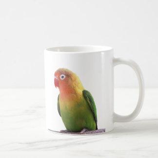 The magnetic cup of Fischer's Lovebird