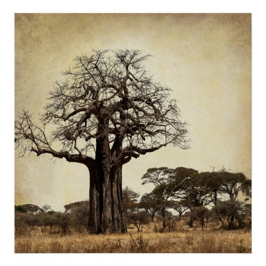 THE MAJESTIC BAOBAB TREE of AFRICA Poster