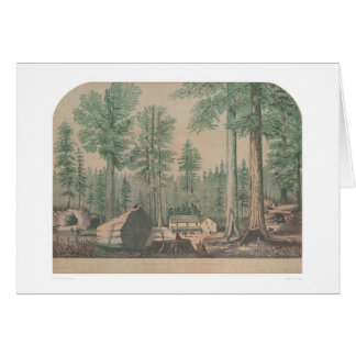 The Mammoth Trees of California (1191) Card