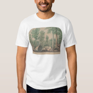 The Mammoth Trees of California (1191) Shirts