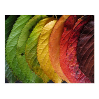 The Many Colors of Autumn Leaves Postcard