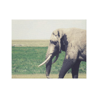 The March of a Elephant Stretched Canvas Print