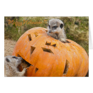 The Meerkats and the Pumpkin - Happy Halloween !! Card