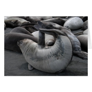 The Mermaid Seal Greeting Card