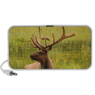 The Mighty Elk Travelling Speaker