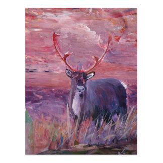 The Mighty Moose Mongoose Reindeer Elk Rentier Car Post Cards