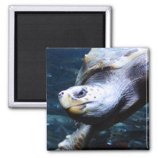 The Mighty Tortoise Fridge Magnet