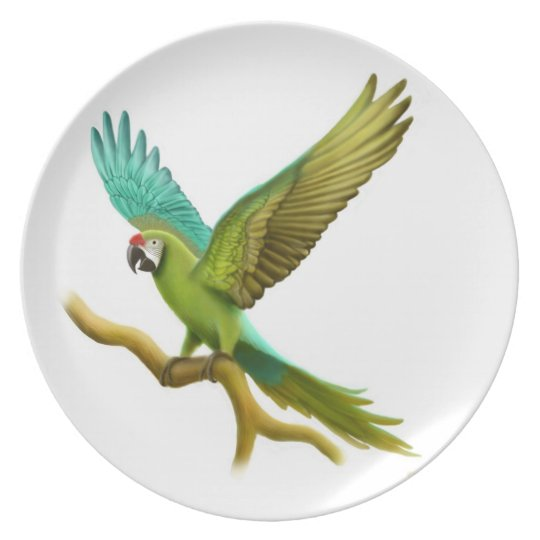 The Military Macaw Parrot Plate