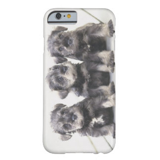 The Miniature Schnauzer is a breed of small dog Barely There iPhone 6 Case