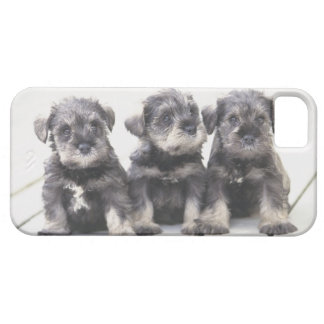 The Miniature Schnauzer is a breed of small dog iPhone 5 Case