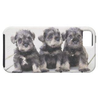The Miniature Schnauzer is a breed of small dog iPhone 5 Covers
