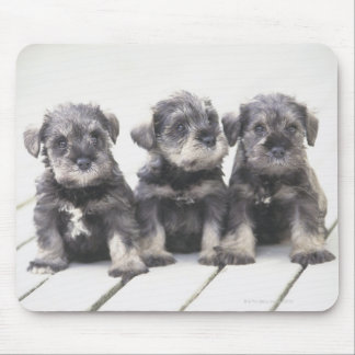 The Miniature Schnauzer is a breed of small dog Mouse Pad