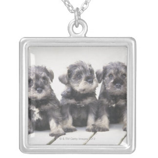 The Miniature Schnauzer is a breed of small dog Square Pendant Necklace
