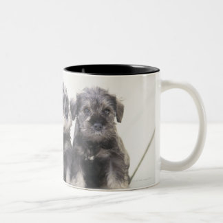 The Miniature Schnauzer is a breed of small dog Two-Tone Coffee Mug