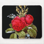The Moss Rose - Vintage Fine Art