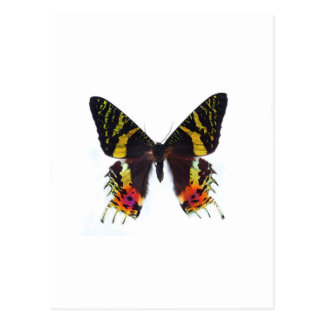 The most beautuiful butterfly in the world postcard