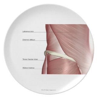 The muscles of the lower body plate
