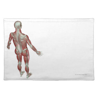 The Musculoskeletal System 12 Placemat
