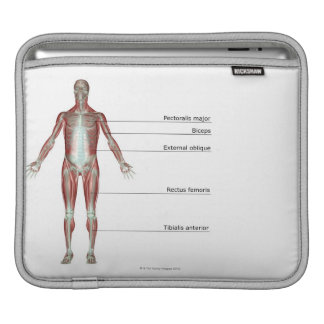 The Musculoskeletal System 2 iPad Sleeve