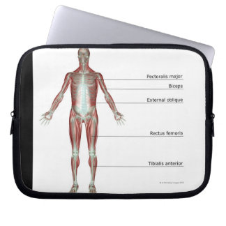 The Musculoskeletal System 2 Laptop Sleeve