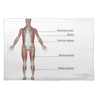 The Musculoskeletal System 2 Placemat