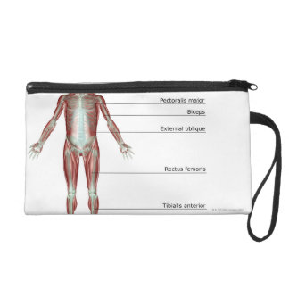 The Musculoskeletal System 2 Wristlet Purses